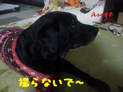 20140219ange1.jpg