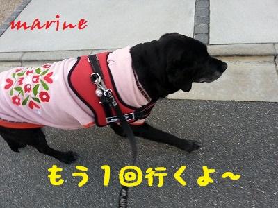20140221marine3.jpg