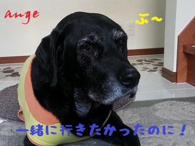 20140226ange7.jpg