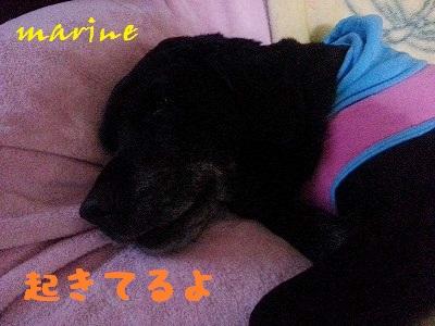 20140226marine1.jpg