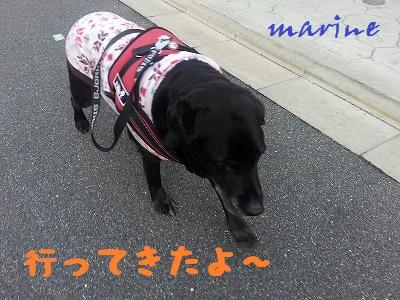20140306marine4.jpg