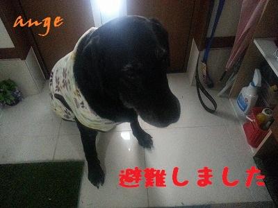 20140307ange3.jpg