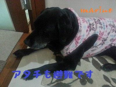 20140307marine4.jpg