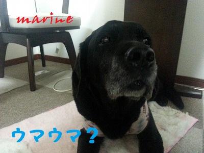 20140307marine5.jpg