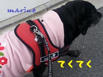 20140309marine2.jpg