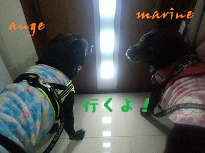 20140311marineange1.jpg