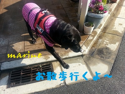 20140315marine4.jpg