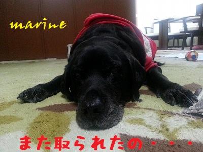 20140317marine5.jpg