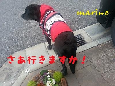 20140318marine5.jpg