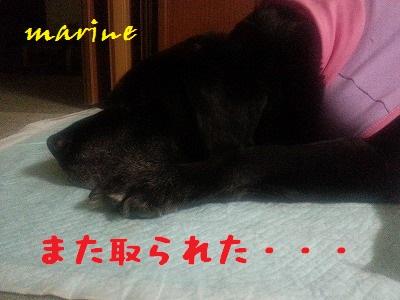 20140319marine1.jpg
