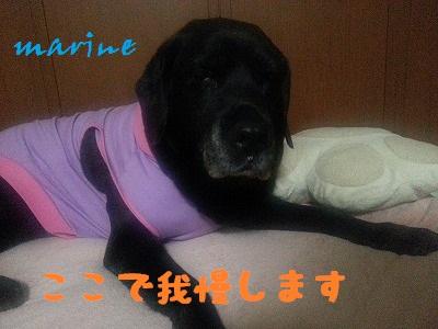 20140319marine2.jpg