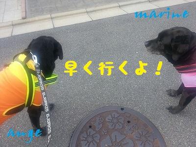 20140319marineange2.jpg