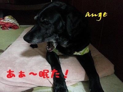 20140326ange4.jpg