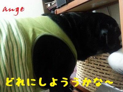 20140326ange7.jpg