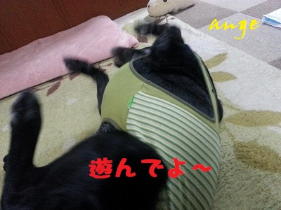 20140326ange8.jpg