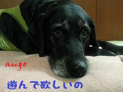 20140326ange9.jpg
