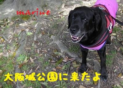 20140329marine3.jpg