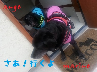 20140329marineange1.jpg