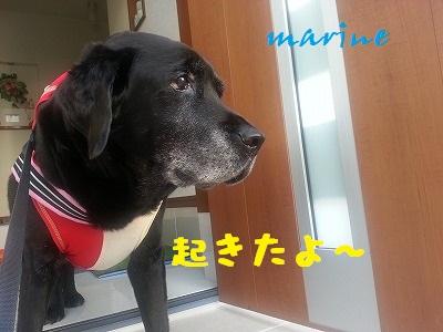 20140403marine1.jpg