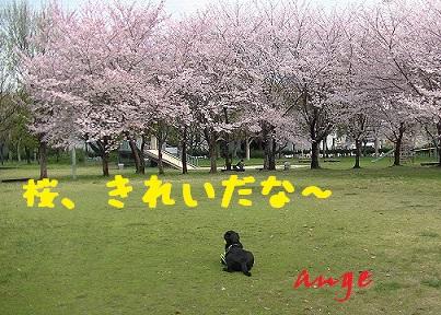 20140404ange7.jpg