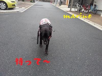 20140404marine3.jpg