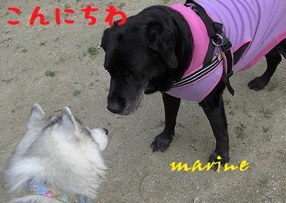 20140405marine1.jpg