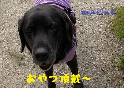20140405marine8.jpg