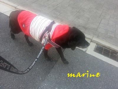 20140408marine1.jpg