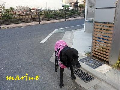 20140414marine4.jpg