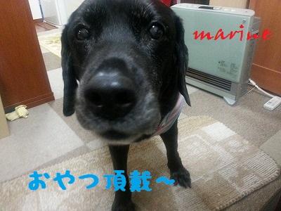 20140416marine6.jpg