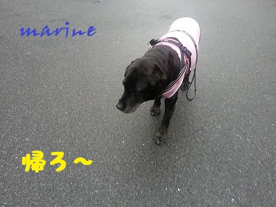 20140418marine6.jpg