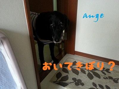 20140421ange4.jpg