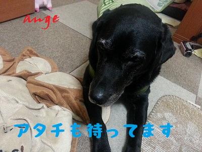20140422ange6.jpg