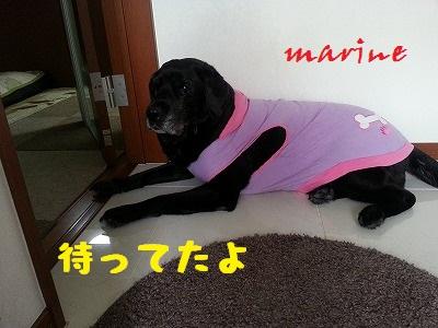 20140501marine1.jpg