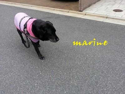20140501marine4.jpg