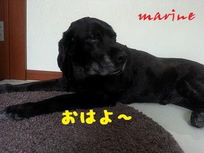 20140503marine1.jpg