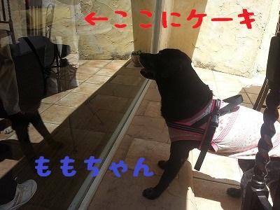 20140504_113415.jpg