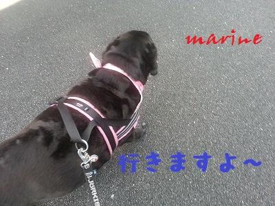 20140513marine2.jpg