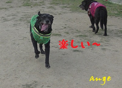 20140525ange3.jpg