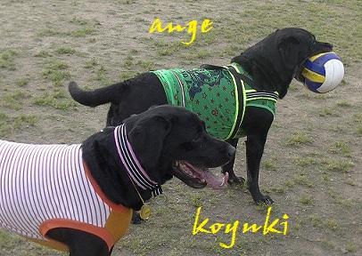 20140525angekoyuki2.jpg