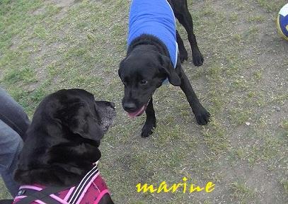 20140525marine5.jpg