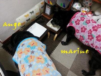20140526marineange4.jpg