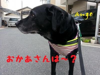 20140529ange2.jpg