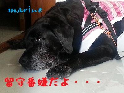 20140603marine5.jpg