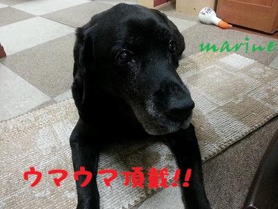20140603marine7.jpg
