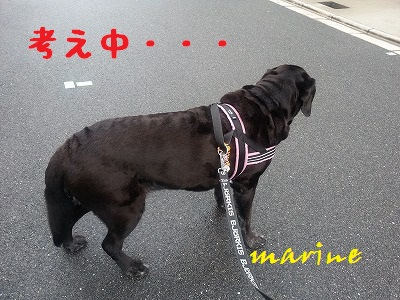 20140605marine3.jpg