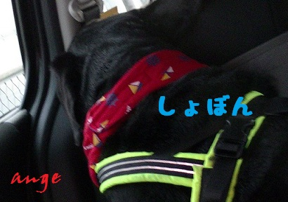 20140608ange6.jpg