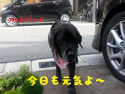 20140610marine6.jpg