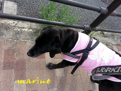 20140626marine2.jpg