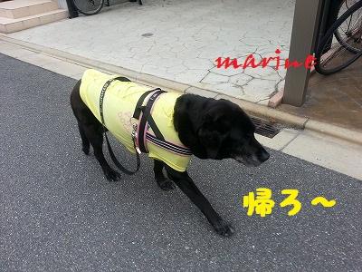 20140630marine6.jpg